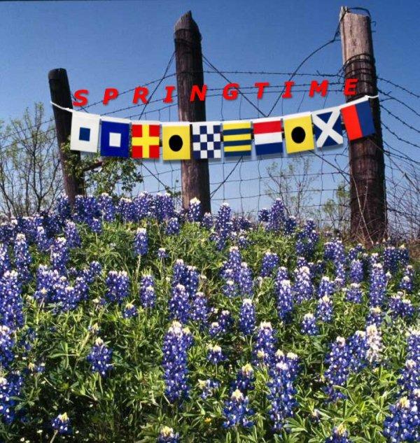 jpg-bluenonnett-springtime